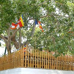 Jaya_Sri_maha_Bodhi