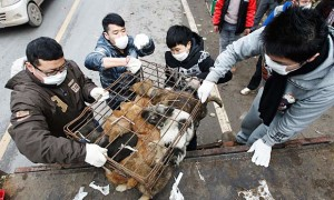 Chinese volunteers rescue dogs destined for restaurants in Chongqing, China