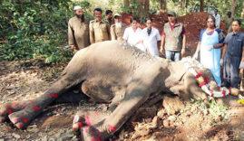 elephant-Indira