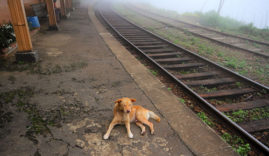 Dogs in rail way LNP