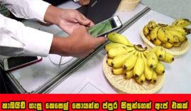 Cabite banana